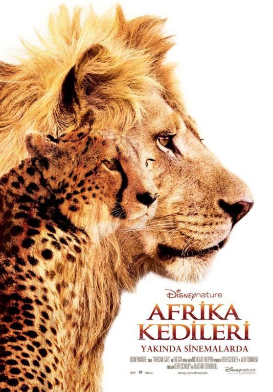 Afrika Kedileri