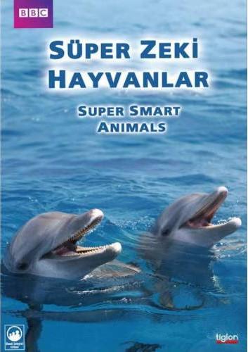 Süper Akıllı Hayvanlar: Bölüm 2 Sosyal  Zeka