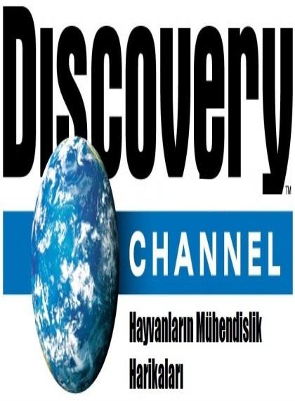 Discovery Channel: Hayvanların Mühendislik Harikaları