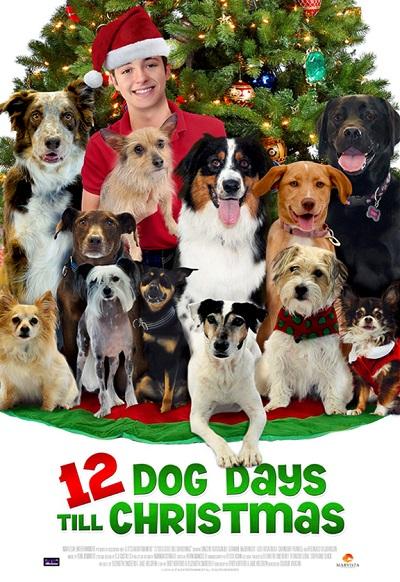 Noel'in 12 Köpeği